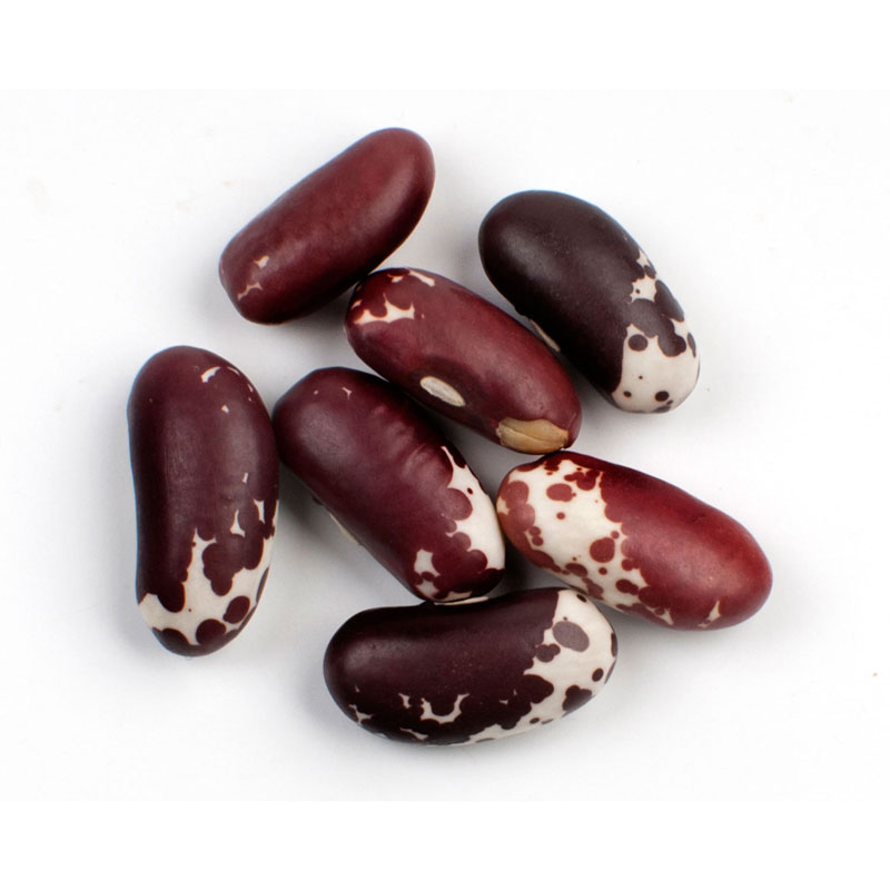 JACOBS CATTLE / TROUT BEANS