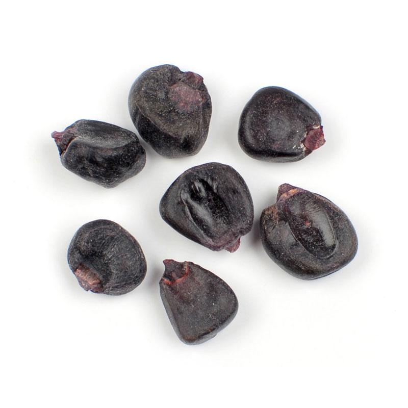 DRIED PURPLE CORN