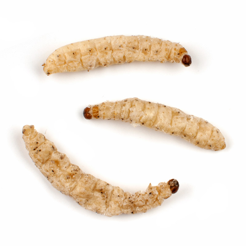 Whole Bamboo Worms